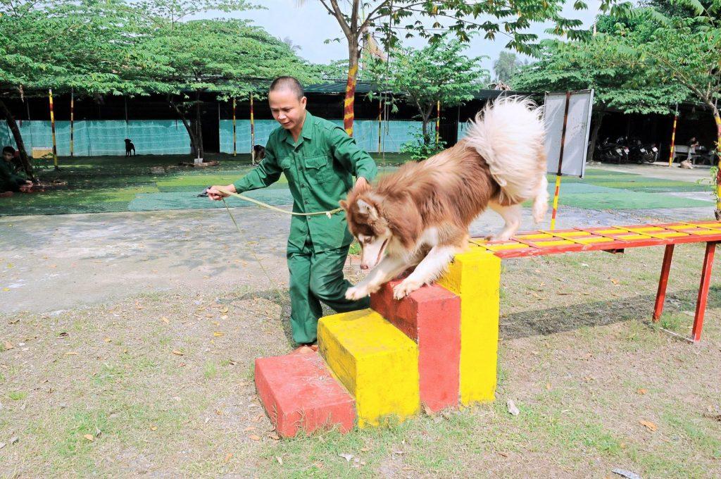 Trường huấn luyện chó cảnh uy tín số 1 tại Tphcm